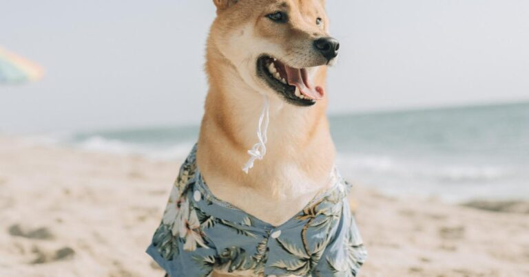 Gamestop Corp. (GME), Tesla Motors (TSLA) – Why Is Dogecoin Being Succhhhh A Good Boi Right Now?